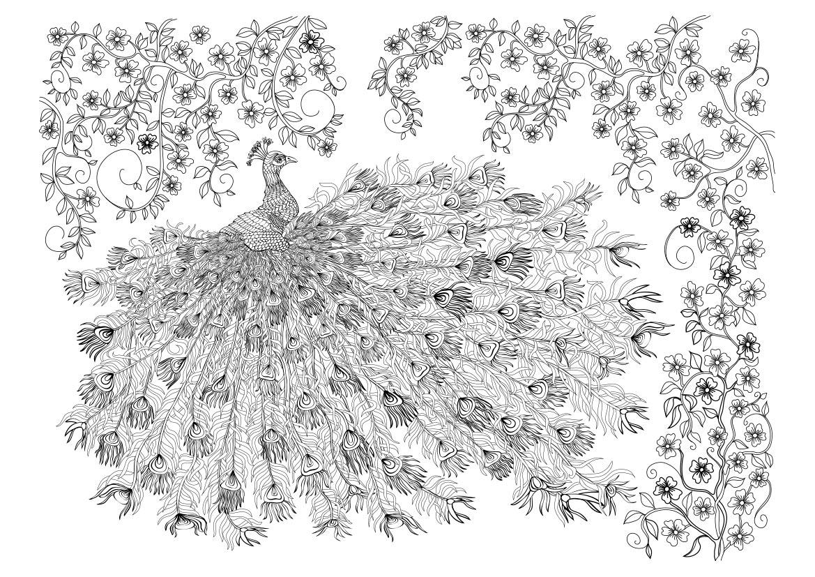 Dibujo Para Colorear Mandala De Un Pavo Real Con Flores
