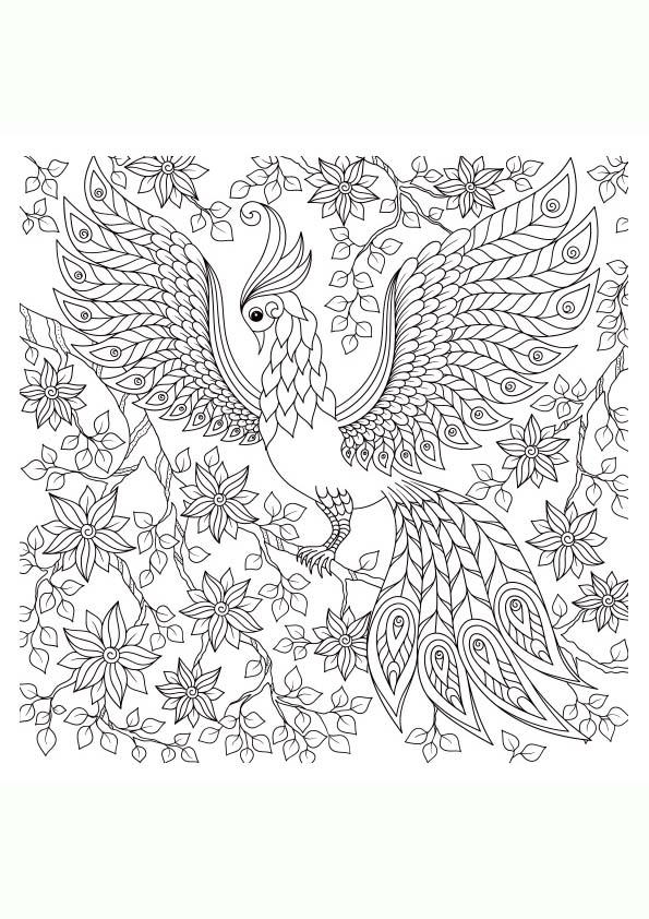 Dibujo Para Colorear Mandala Ilustración Silueta Pavo Real