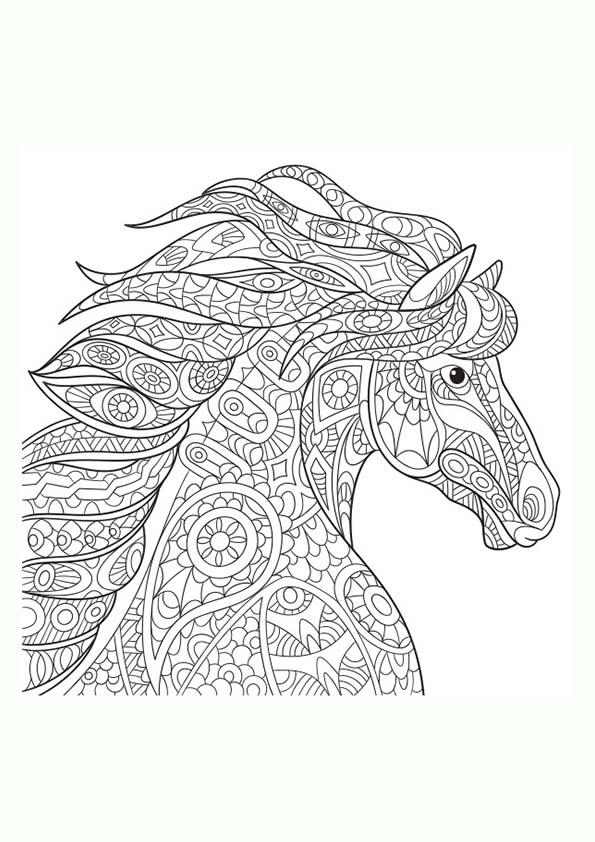 Dibujo Para Colorear Mandala Ilustración Caballo Silvestre